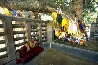 The Bodhi Tree in Bodhgaya